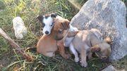 Отдаются в дар щенки